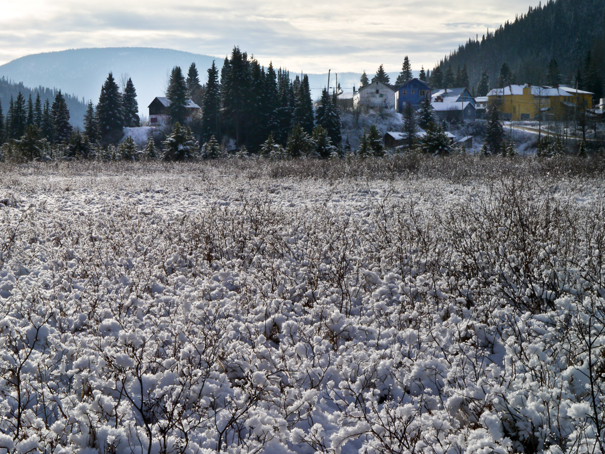 Willow winter cotton - made of fresh snow.