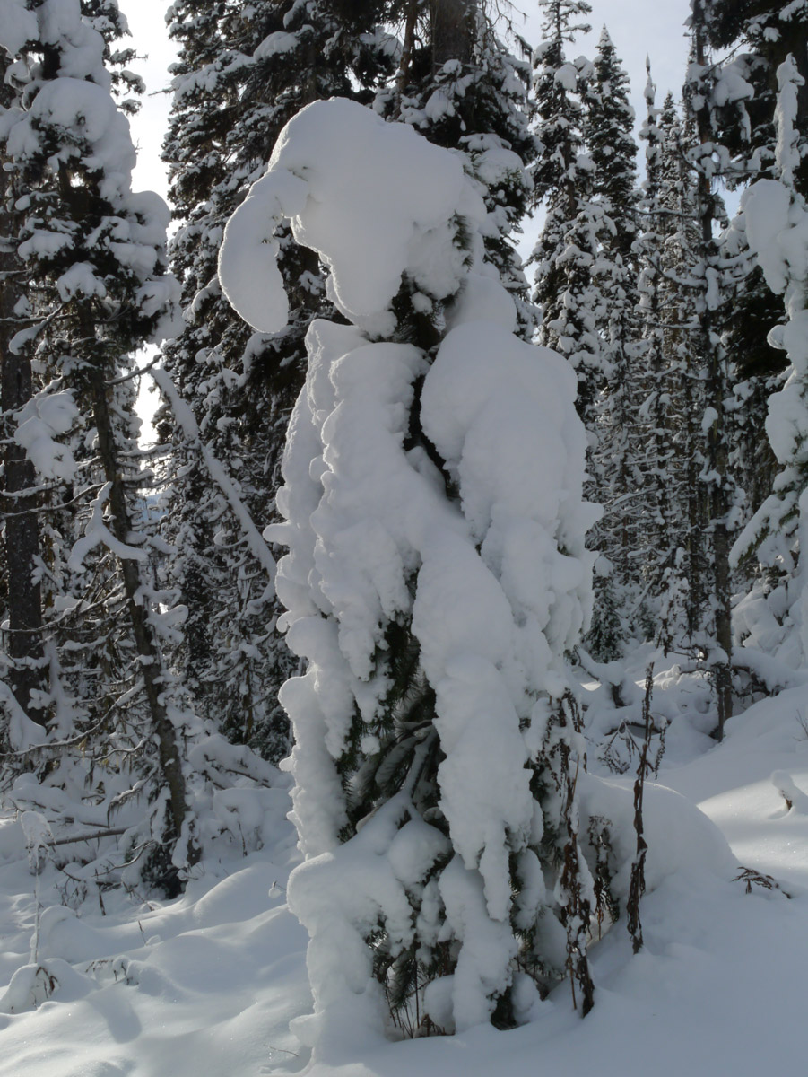 Puppet tree - dressed in fresh snow.