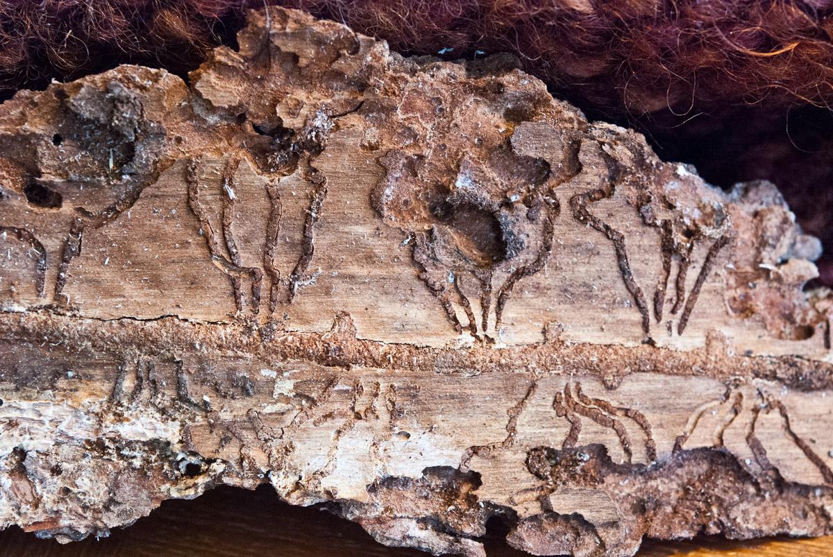 Banff bark0106